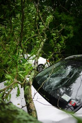 tree branch fell on top of a car