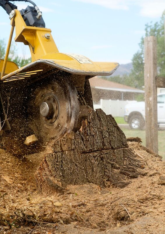 stump grinding the roots of a tree
