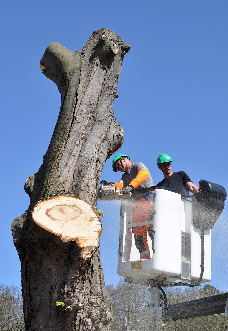 2 men in a tree trimming bucket cutting a tree