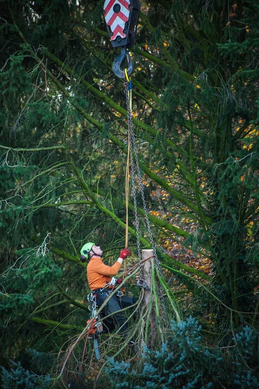 man climbing up the line trimming trees
